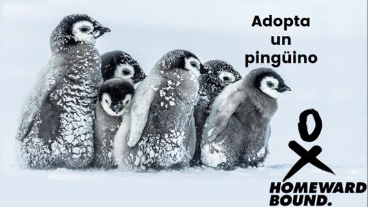 Adopta un pingüino